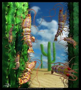 Ocean Invasion #5: Prawns of the Sonoran