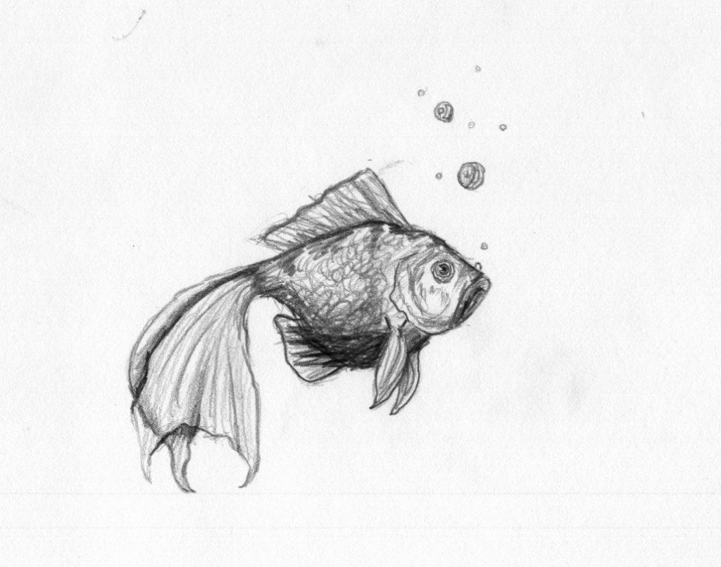Animal Pencil Sketches Junior Highhigh School Archives