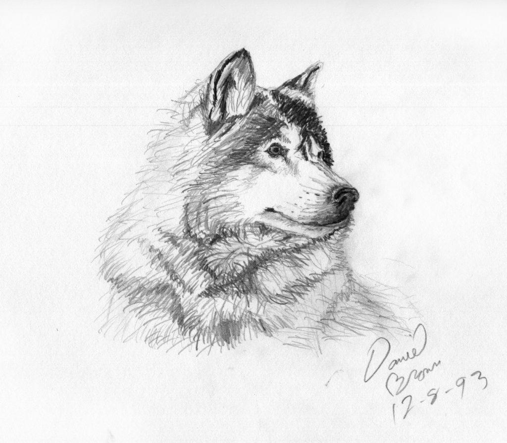 Laughingmantisleave a commentanimal pencil sketches junior high high schoolanimals junior high pencil wolf