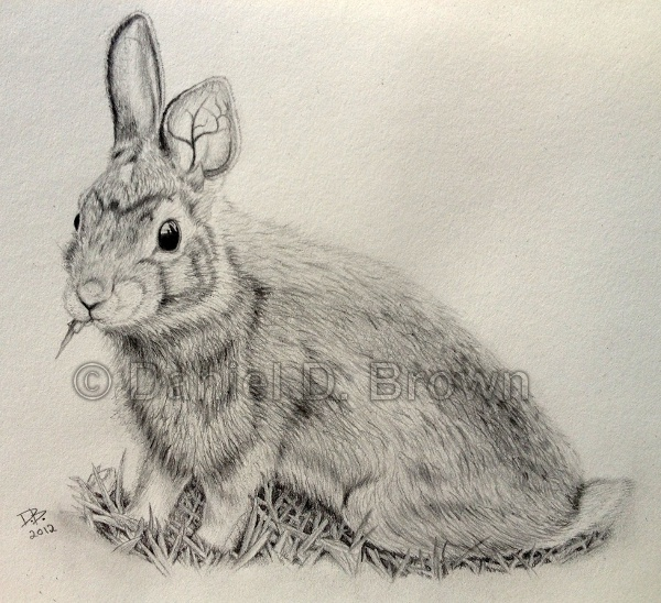 Rabbit, Daniel D. Brown, 2012, pencil