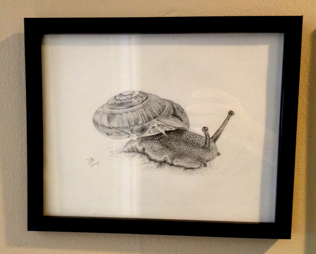 Snail, Daniel D. Brown, 2012, pencil, framed