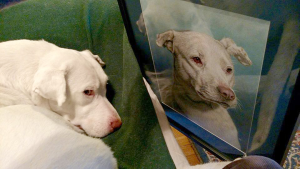 And here's the pup with his portrait