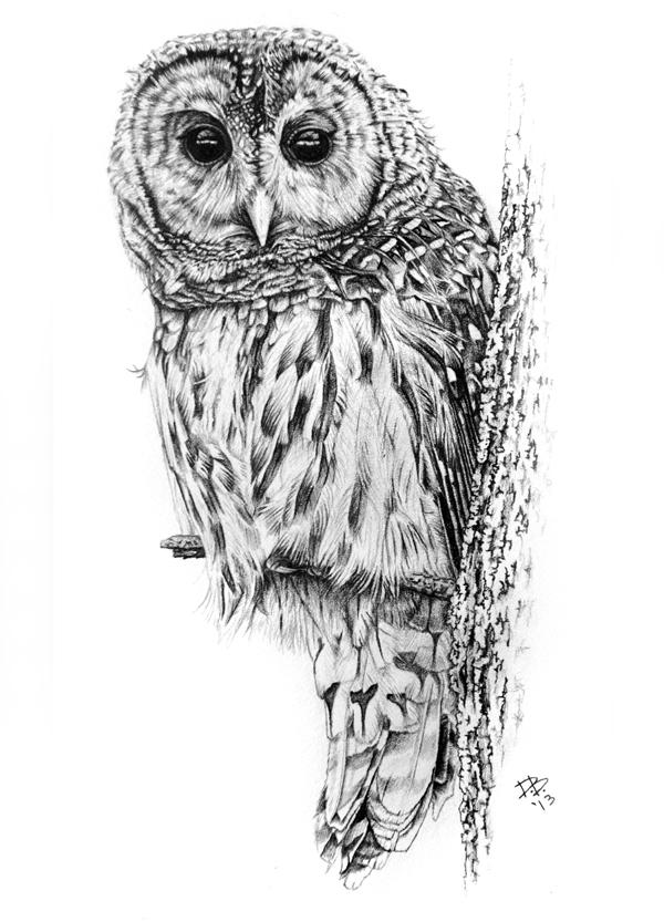 """Barred Owl"""