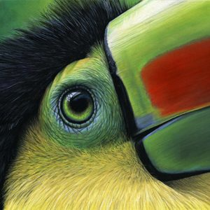 """Bob the Keel-billed Toucan"""