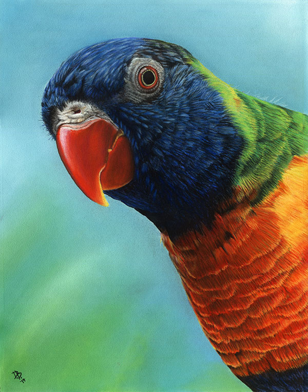 """Ooh! More nectar!"" Rainbow Lorikeet"