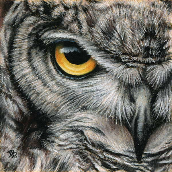 """Great Horned Owl"" sketch"