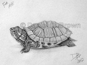 Baby Red-Eared Slider Turtle, Daniel D. Brown, 2012, Pencil