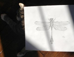 Dragonfly on cat