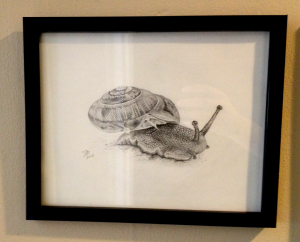 Snail, Daniel D. Brown, 2012, pencil, framed