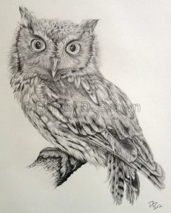 Eastern Screech Owl, Daniel D. Brown, 2012, pencil